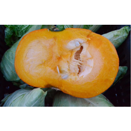 Courge muscade 1kg